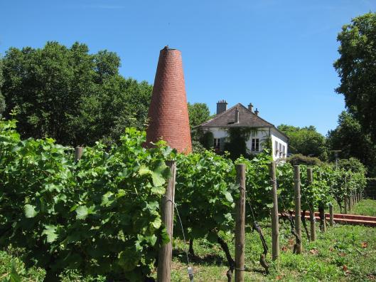 Vineyard, Parc de Bercy