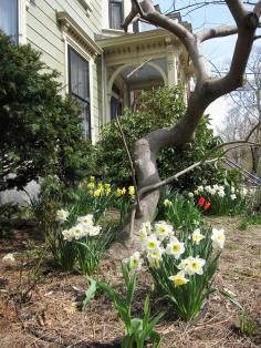 April in Mid Cambrige