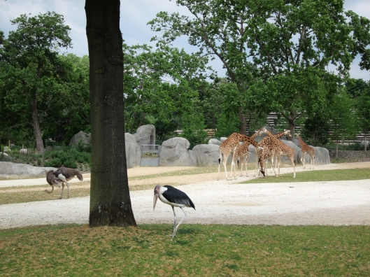 Just a part of the big African area at the Paris zoo.