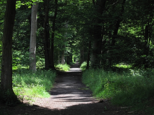 A forest path in the Domain de Chantilly.