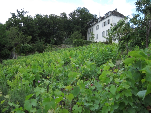 Vineyard on the north slope of Montmartre.