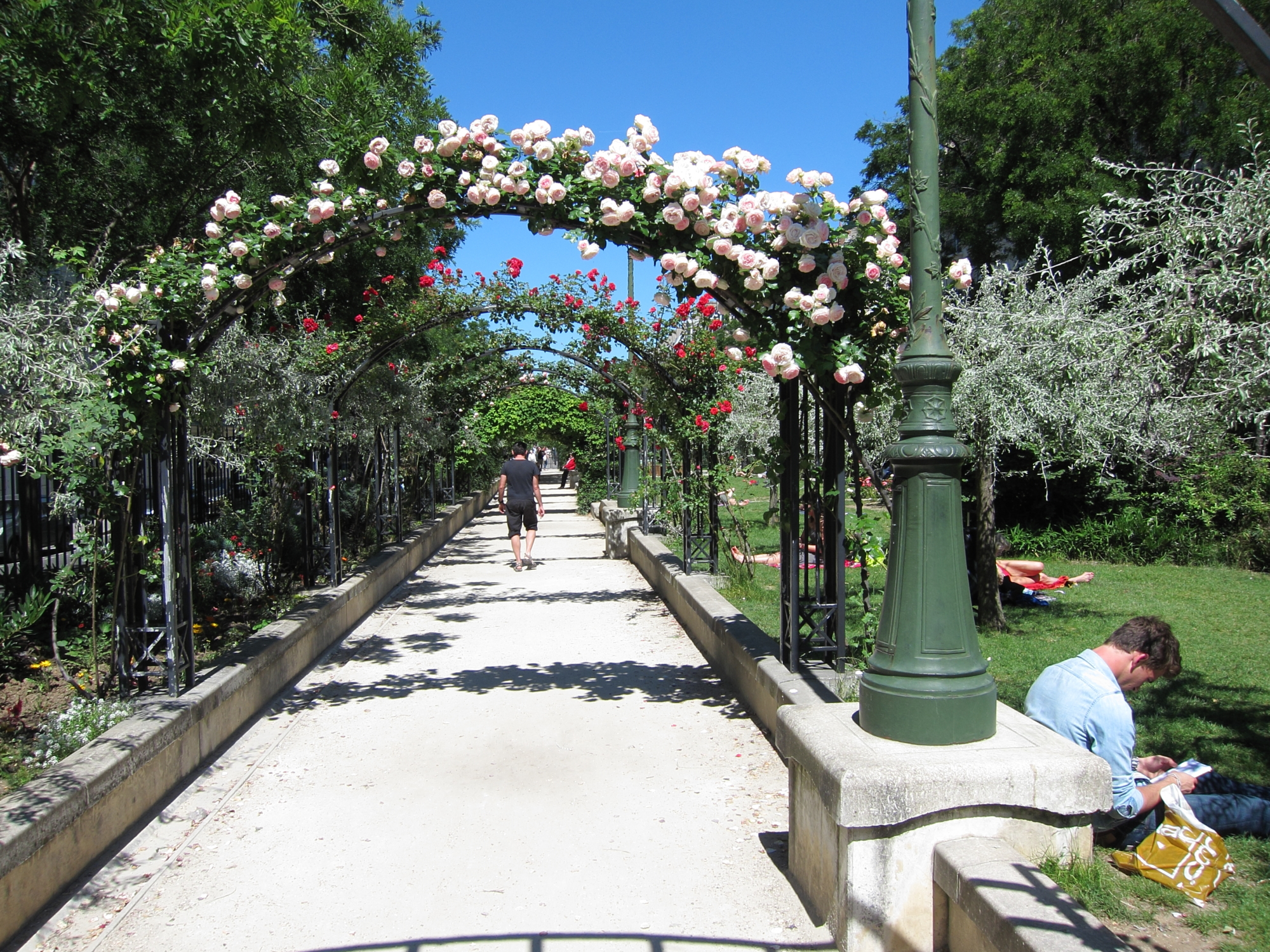 A rose bower in the park that runs down the middle of Boulevard Pereire in the 17e.