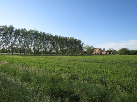 The farmhouse is surrounded by wheat fields.