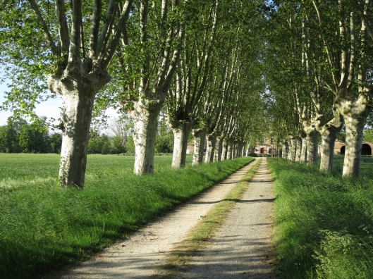 The house is a tenth of a mile from the road, down an allée of plane trees.